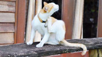 Jak kočku zbavit blech