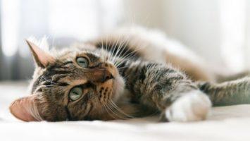 Jak léčit kočičí rýmu