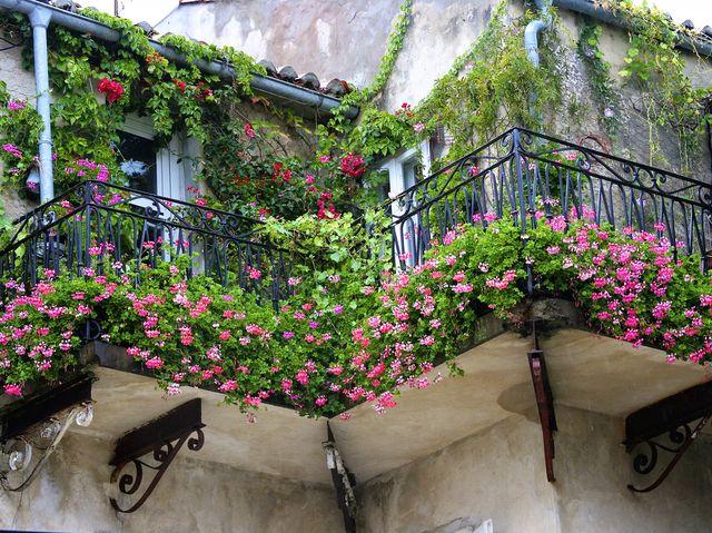 rostliny-kvetiny-balkon-truhlik