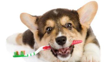 Bakterie v psích ústech