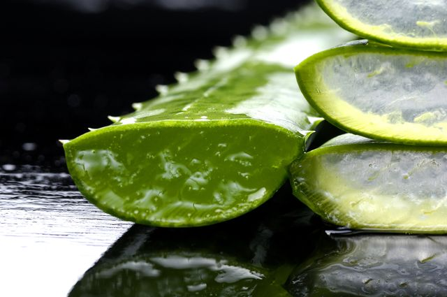 Řezy rostlinou aloe vera, Zdroj: Shutterstock.com