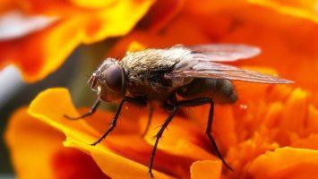 Jak se zbavit much