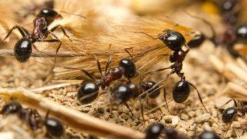 Jak se zbavit mravenců