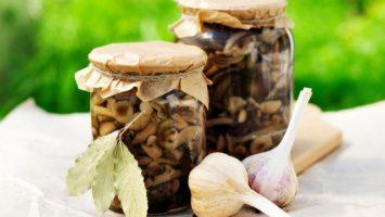 Jak zavařit houby