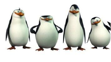 FOTO: Tučňáci z Madagaskaru