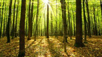 Pobyt v lese snižuje stres, depresi i únavu