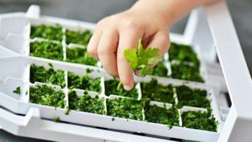 Jak uchovávat bylinky