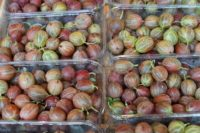 Recept na angreštovou marmeládu. Vyrobte si tradiční dobrotu z netradiční suroviny