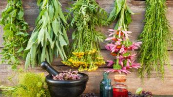 Jak správně sušit bylinky