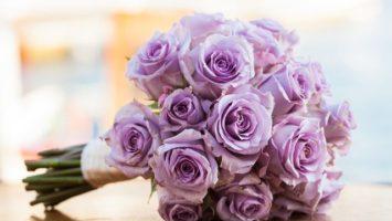 Barvy růží význam