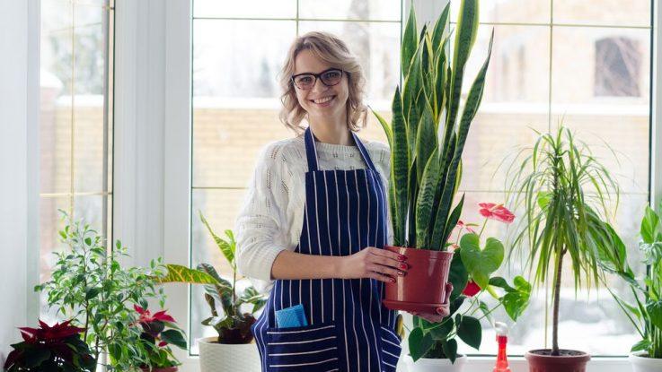 Jak pečovat o pokojové rostliny v zimě