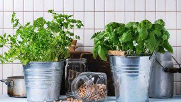 Jak pěstovat bylinky doma