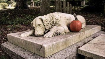 Jak se vyrovnat se ztrátou psa