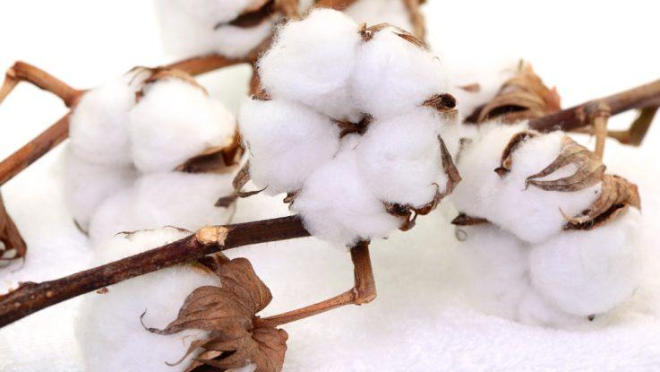 Bavlněné povlečení, bavlna