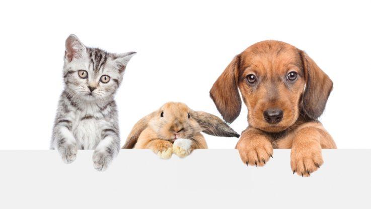Pes nebo kočka