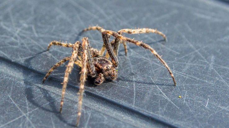Jak se zbavit pavouků doma