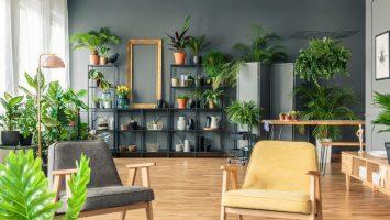 Jak umístit do pokoje pokojové rostliny