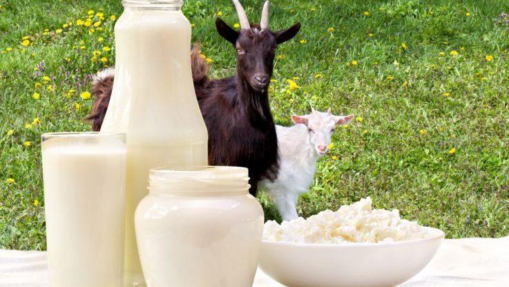 Kozí, ovčí nebo kravské mléko