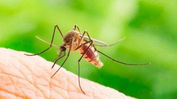 Jak odpudit komáry