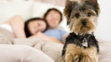 Co dokáže vycítit pes