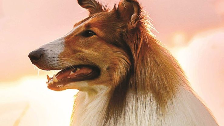 Lassie se vrací 2020