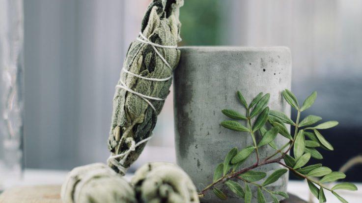 Šalvěj pěstování a účinky